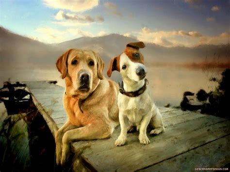 imagenes wallpaper de animales perros en wallpaper imagenes