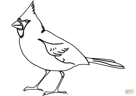 birds of indiana coloring pages northern cardinal coloring page free printable coloring