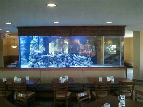 design aquarium restaurant 1100 gallon custom l shaped aquarium located in a