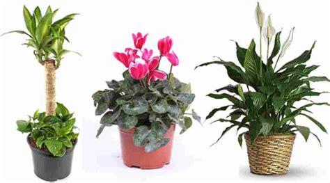 imagenes de flores ornamentales plantas ornamentales beneficios y mas informacion util