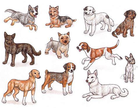 a dog breeds page 3 by bafa on deviantart