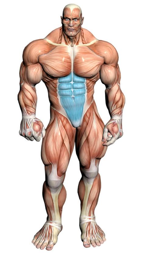 abs exercises   video exercise guides muscle