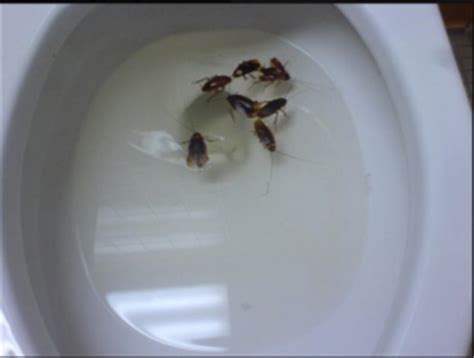 roaches in the bathroom big roaches big trouble in the bathroom pest cemetery
