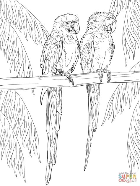 Scarlet Macaw Coloring Page of scarlet macaw free coloring pages
