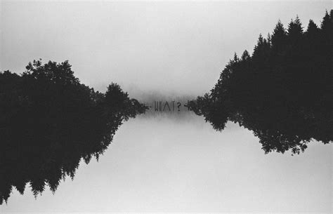 Trees Trees Typography Black trees forest faded black monochrome grain