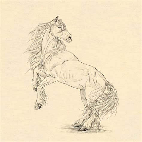 draw horse illustrator how to draw animals horses their anatomy and poses
