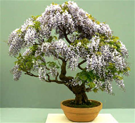 japanese house plants asian home decoration
