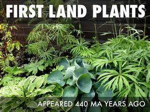 first land first land plants appear www imgkid com the image kid