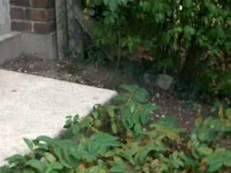 lapin qui court dans le jardin