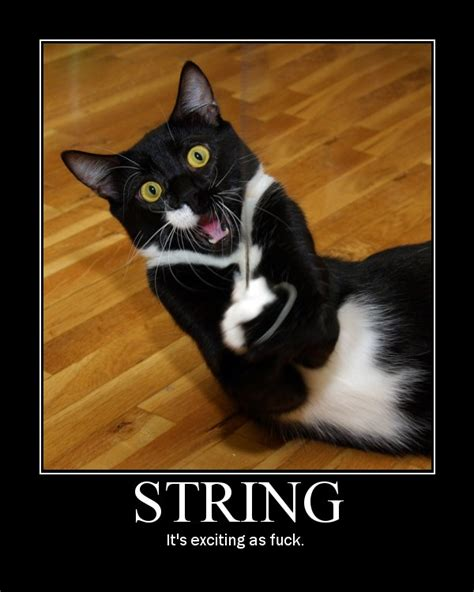 String Cat - 301 moved permanently