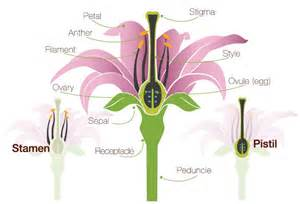flower pollination resource guide proflowers blog