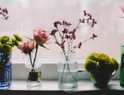 Flowers For Windowsill Window Sill Flowers Flickr Photo