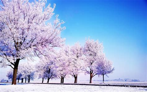 Photo Collection Photos Winter Wallpaper