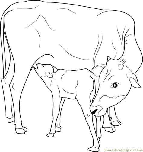 indian   calf coloring page  printable