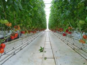 House Floor Plans Ontario africa has vast agricultural potential so why are we due