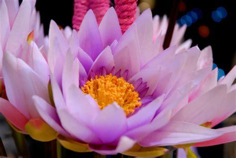 nomi di fiori con la a perch 233 i fiori profumano notizie it