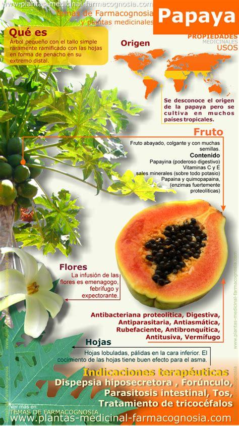 propiedades medicinales de la papaya botanica propiedades medicinales de la papaya botanica