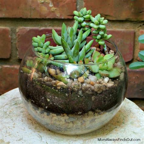 Long Vases For Sale Succulent Terrarium In A Clear Glass Bubble Bowl