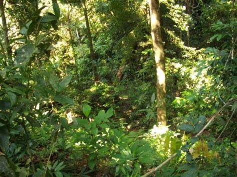 Jungle Landscape Pictures Post On Experimental Design