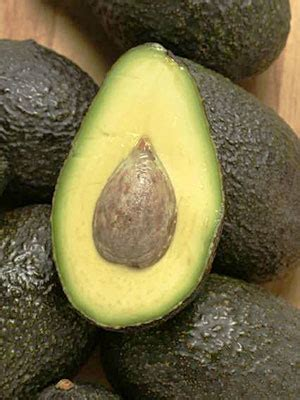 are avocados for dogs ask a vet if avocados are dangerous for dogs what s up with avocado food l a