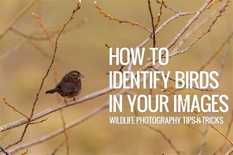 how to identify birds in your images wildlife
