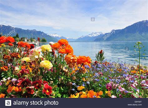 Geneva Flowers 8 summer view of blooming flowers in geneva lake