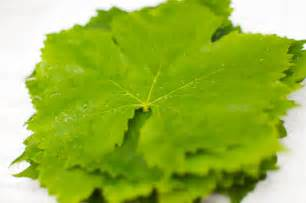 grape leaves once more from the waste not want not department
