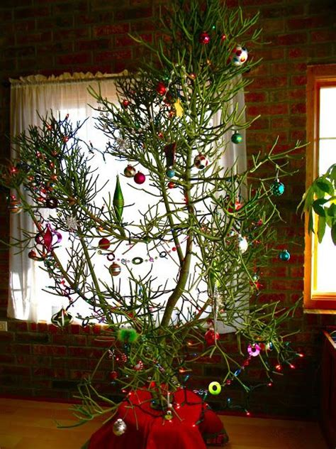 cactus christmas tree holidays pinterest