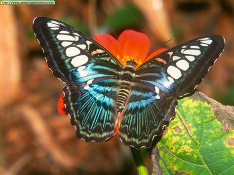 imagenes de mariposas sicodelicas fotos de mariposas i