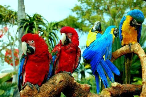 how long do parrots live lifespan of parrots