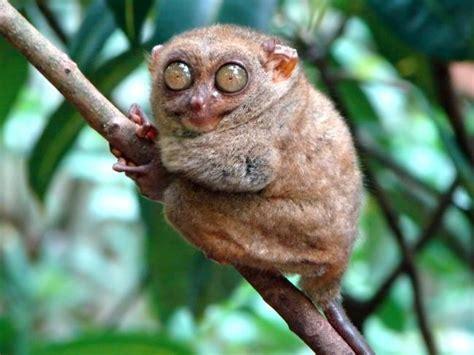 scimmia sedere rosso hdmax dziwne zwierze 187 tapety ssaki hd