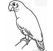 Parrot Coloring Page  Free Parrots Pages