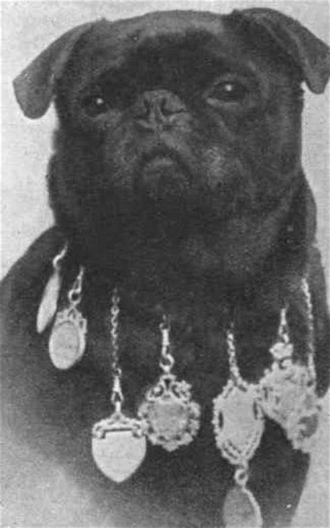 black pug history pug history and vintage photographs s pug makes me smile