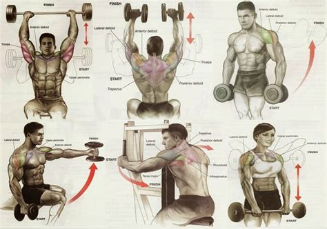 workout chart all bodybuilding