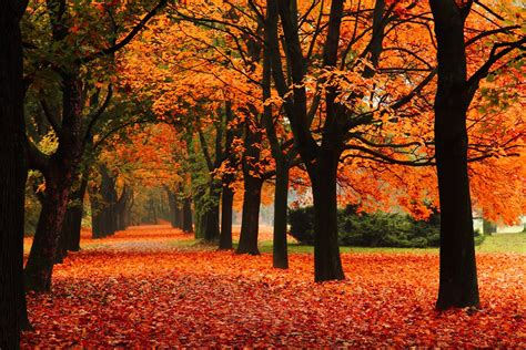 nature park alley tree autumn leaf leaves nature park the