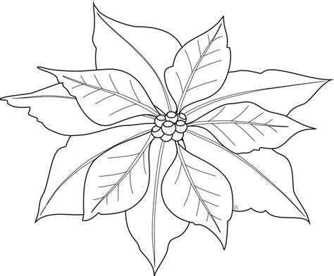free pictures to color free printable poinsettia coloring pages for