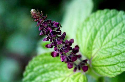 film indonesia ungu violet bunga ungu indonesia asian flower flora beautiful