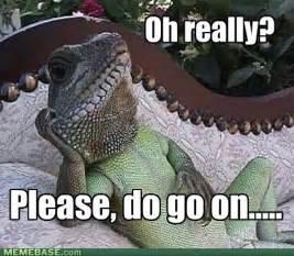Reptilian Meme - geico gecko meme memes