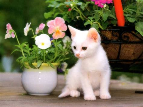 Beautiful Naughty Cats Wallpapers Wallpapers Pictures