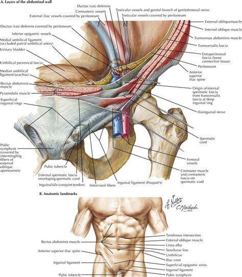 Open Inguinal Hernia Repair Anatomy