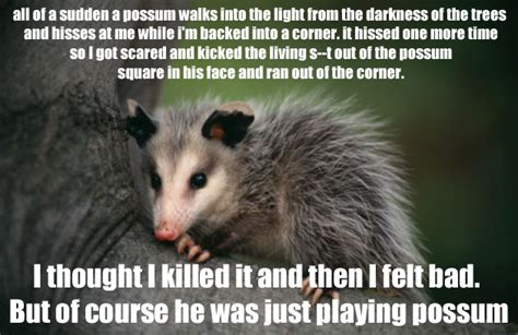 Possum Memes - our favorite non sequiturs from reddit s r trees