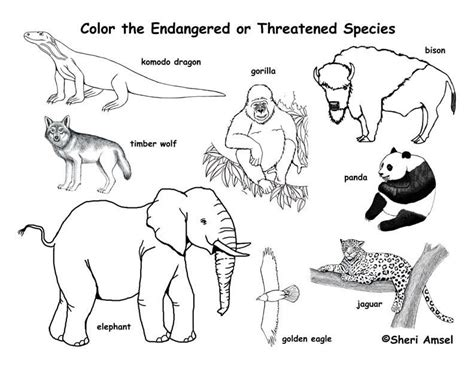 exploring nature coloring pages free download endangered animals coloring page exploring