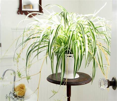 plantas en agua interior 19 plantas de interior sin mantenimiento