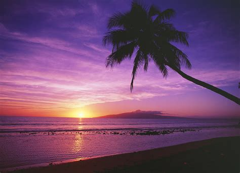 Hawaiian Shower Curtains Purple Sunset And Palm Photograph By Ron Dahlquist