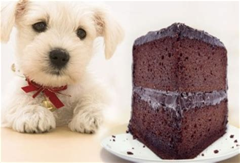 what does chocolate do to dogs never give chocolate to your siowfa12 science in our world certainty and