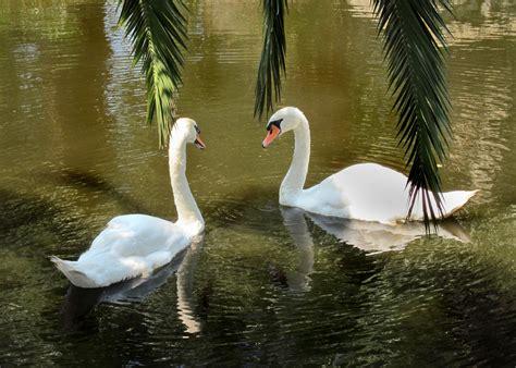 imagenes de paisajes guapos gratis billeder natur vinge dyr dyreliv afspejling