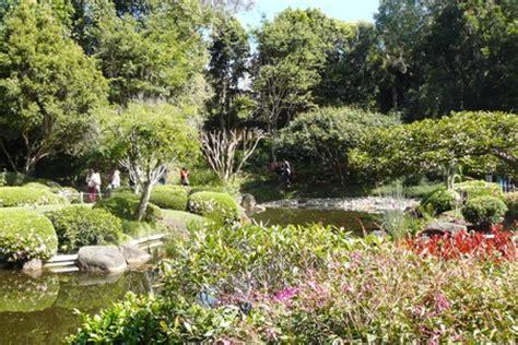 Mt Cootha Botanical Gardens Cafe Japanese Garden Mt Coot Tha Botanical Gardens Brisbane