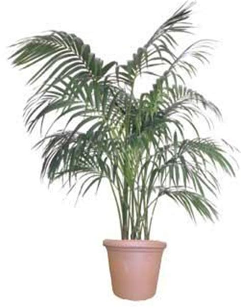 Palm House Plants by Attractive House Plants 2015 Palm House Plants