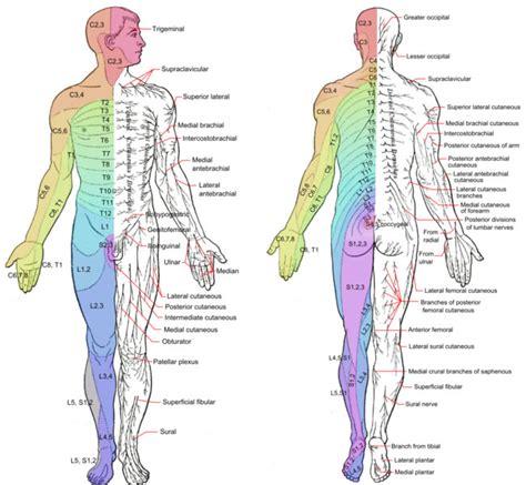 pattern interrupt wikipedia pain anatomy and physiology i