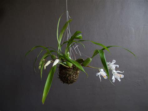 Blumentopf Hängend Selber Machen by Coole Gartengestaltung F 252 R Innenr 228 Ume Fedor Der Valk